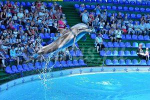 Дельфин, Дельфинарий в Сочи, Водной шоу